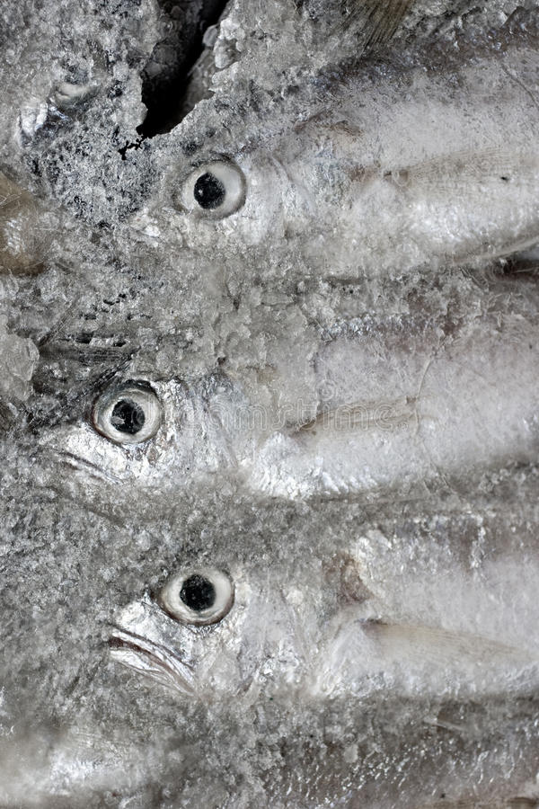 Frozen Fish In The Ice Stock Photography