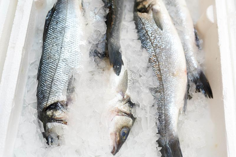 Frozen fish in ice on the counter in the store.  stock photography