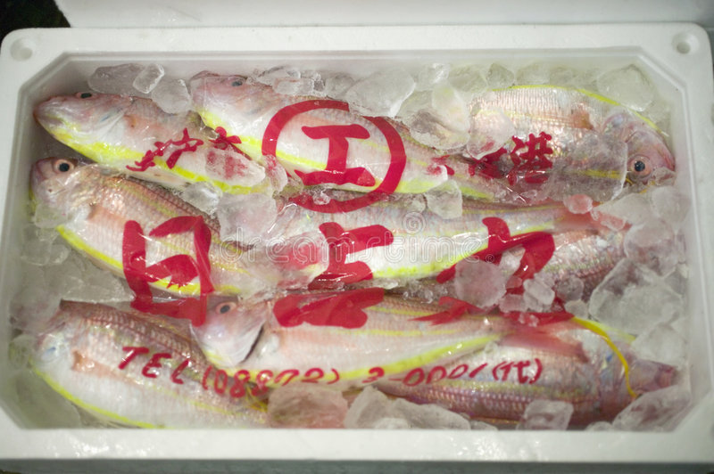 Frozen fish from Japan stock images