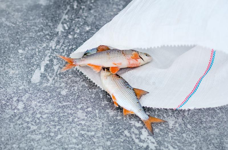 Frozen fish and a packet. stock photos