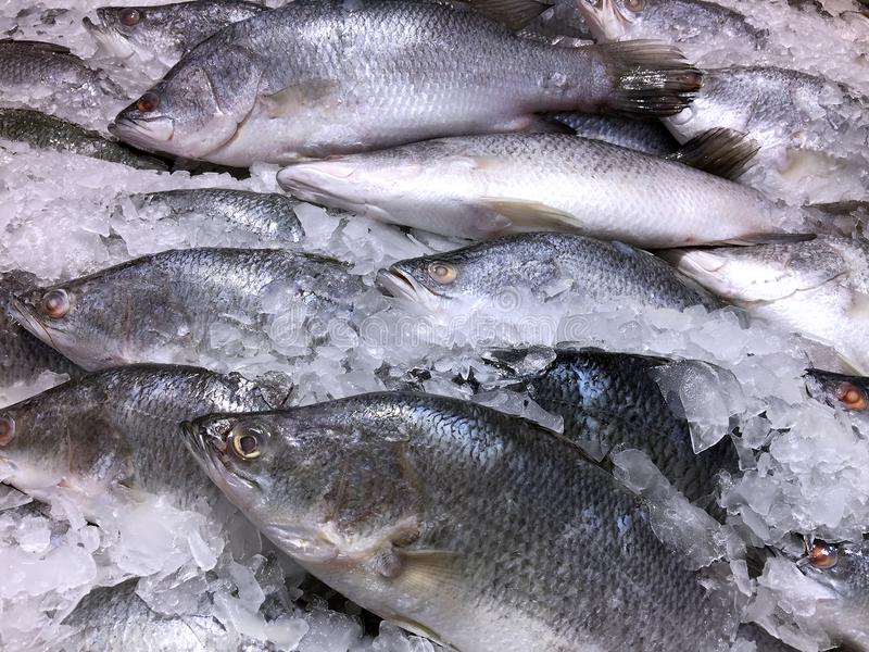 Frozen Fish in a Pile of Ice. Closeup Frozen Fish in a Pile of Ice royalty free stock images