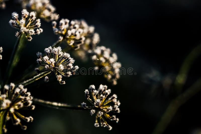 Frozen flower in blue tone, very shallow focus royalty free stock photography