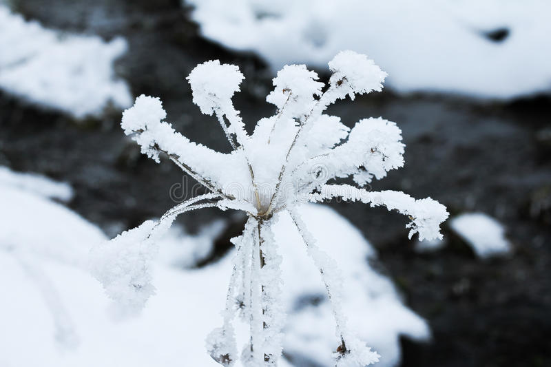 Frozen flower with a little stream behind royalty free stock image