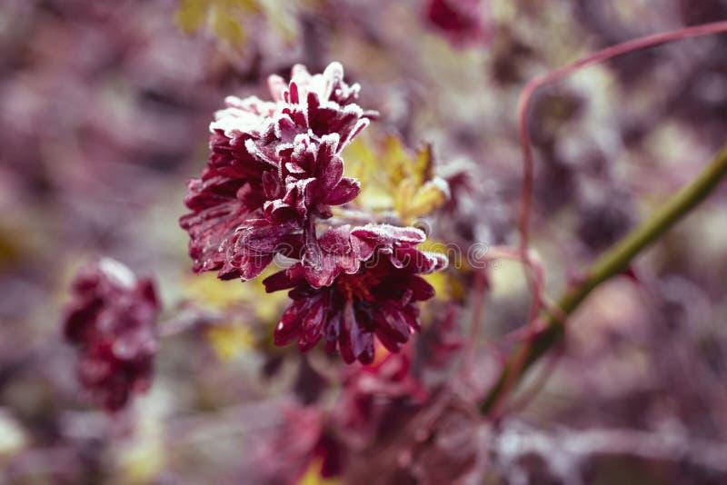 Frozen Flower stock photo