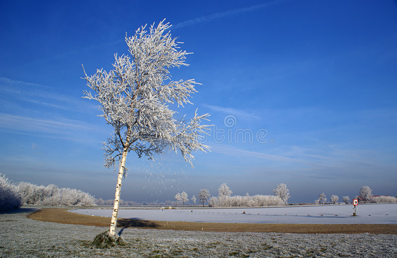 Frozen fog on a tree stock images