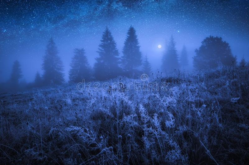 Early frozen morning with hoarfrost on a grass royalty free stock photo