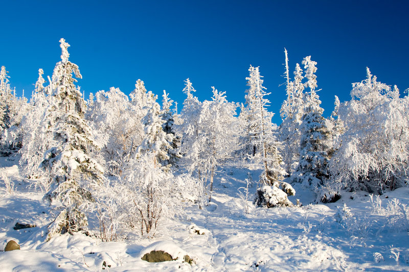 Frozen Forest Alighted By Sunset Royalty Free Stock Images