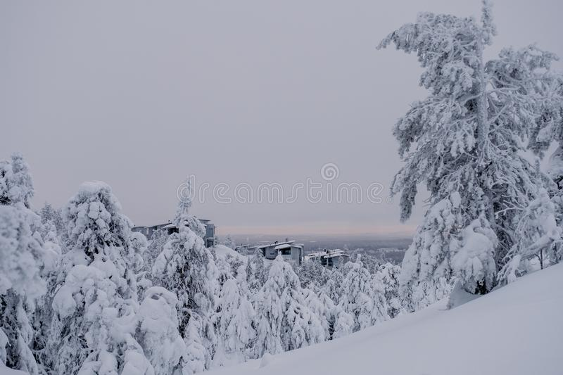 Frozen forest covered by snow stock photo
