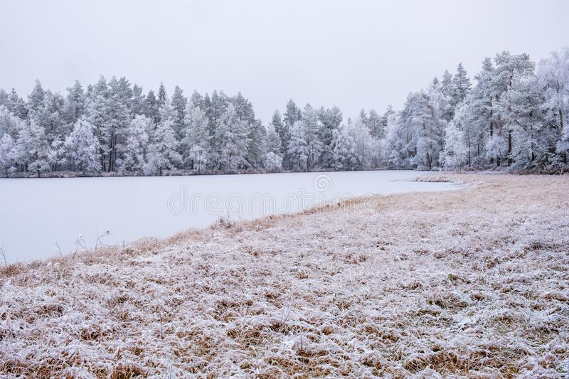 Frozen forest lake in the wilderness royalty free stock photography