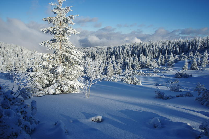 Download Frozen Forest Stock Photo - Image: 83709183