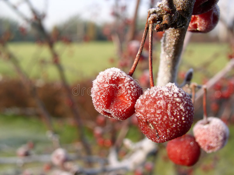 Frozen Fruits #01 Stock Images