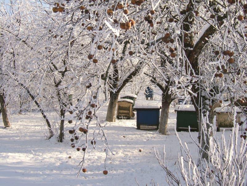 Download Frozen Garden Stock Photos - Image: 504713