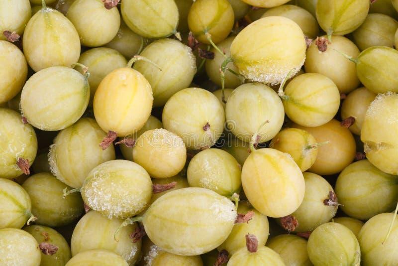 Frozen gooseberries stock images