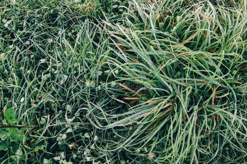 Frozen grass with autumn leaves in foggy meadow in cold morning. Top view. Tranquil moment. Atmospheric morning. Grass in ice dew royalty free stock images