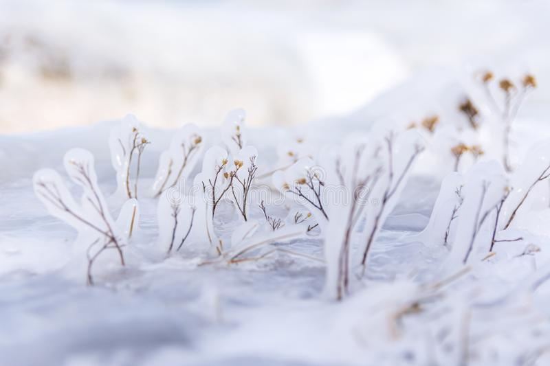 Frozen grass branches close-up view plant covered in ice stock photos