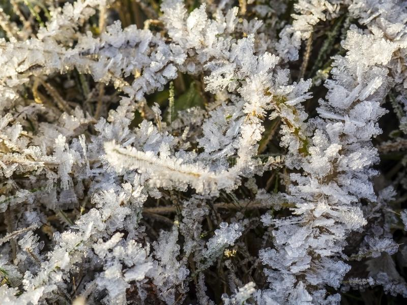 Frozen grass covered with ice crystals after frost stock photography