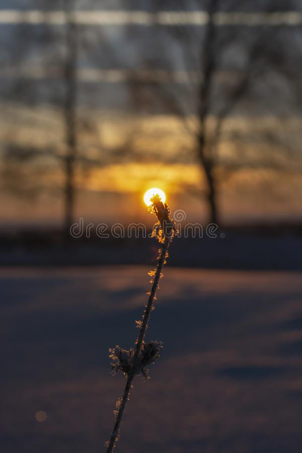 Frozen grass, frost on the background of the sunset. Close-up, winter time. Togliatti stock images