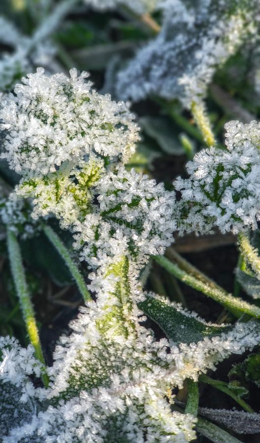 Frozen grass and leaves closeup. Hoar frost plants royalty free stock photo