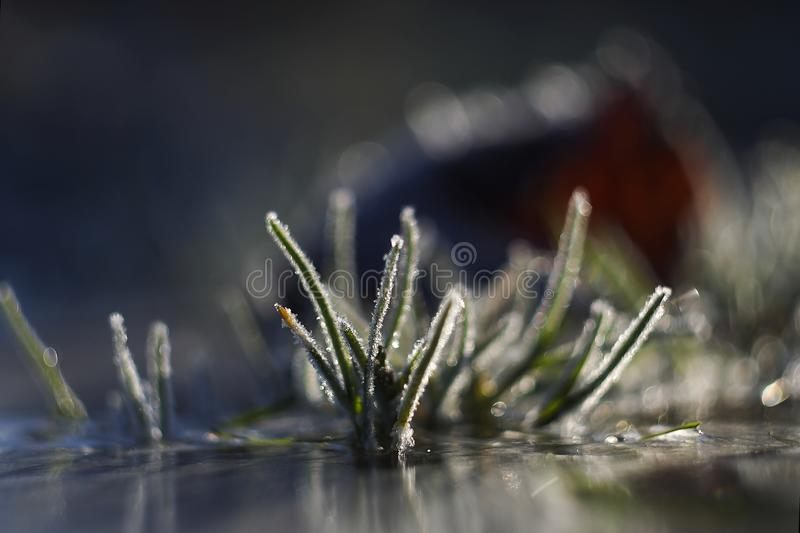 Frozen grass leaves. In the morning light stock photos
