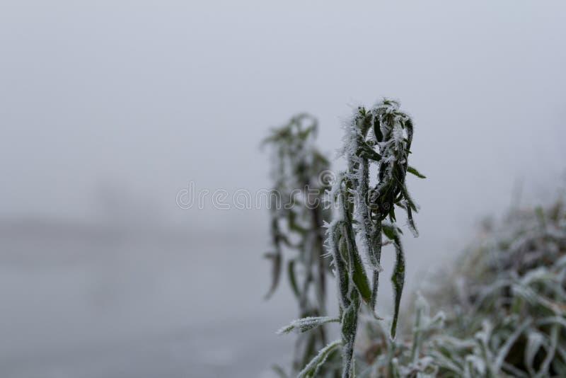 Frozen grass. Snow haze brume nature nice beaty stock photography