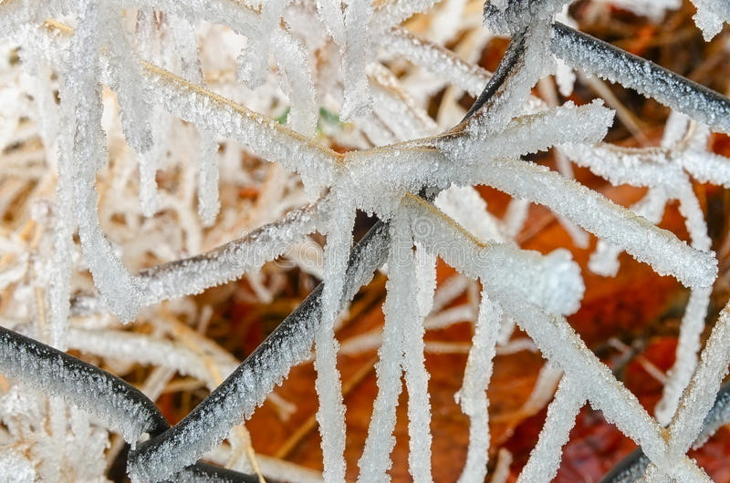 Frozen grasses on the fence. Ice formation in winter time stock photography