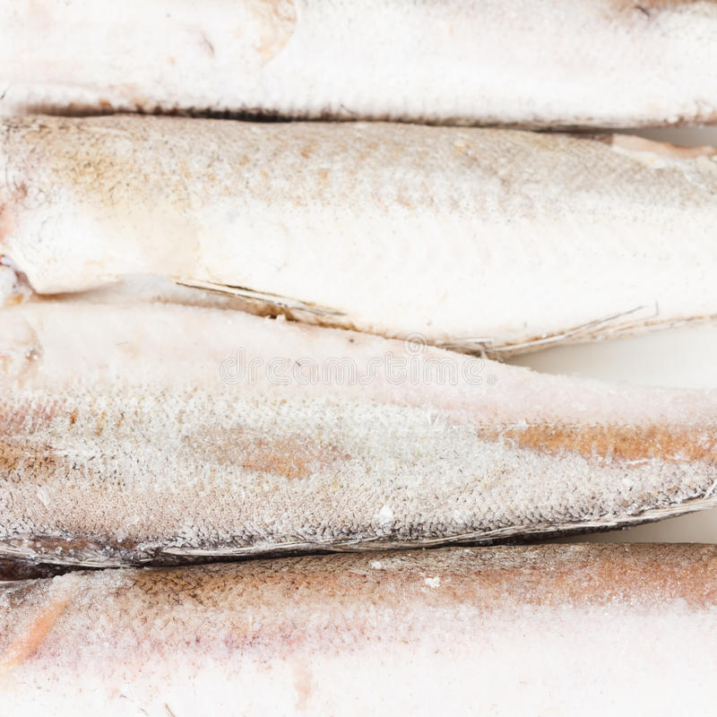 Frozen hake fish on a white background stock photography
