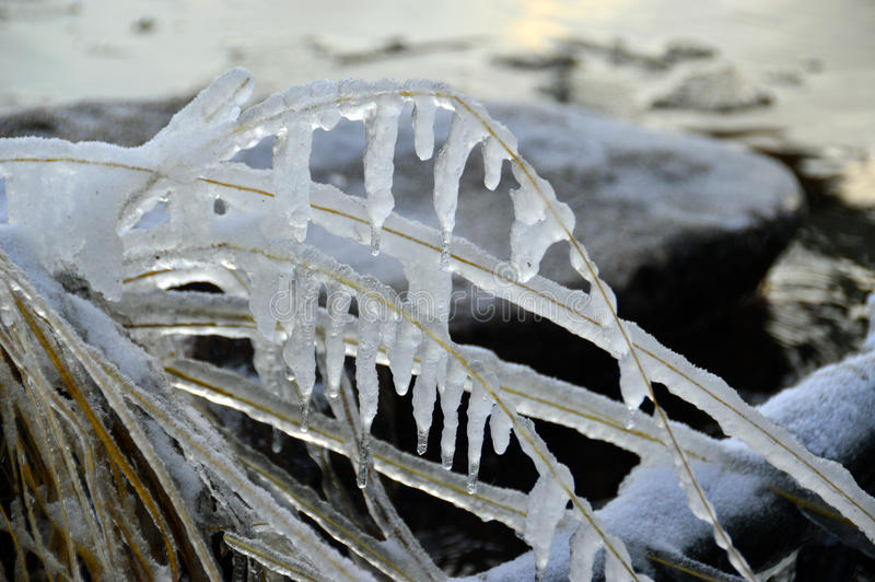 Frozen hays royalty free stock image