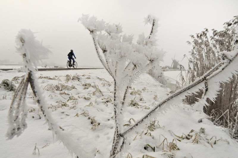 Frozen hogweed. With a cycler in the background stock image