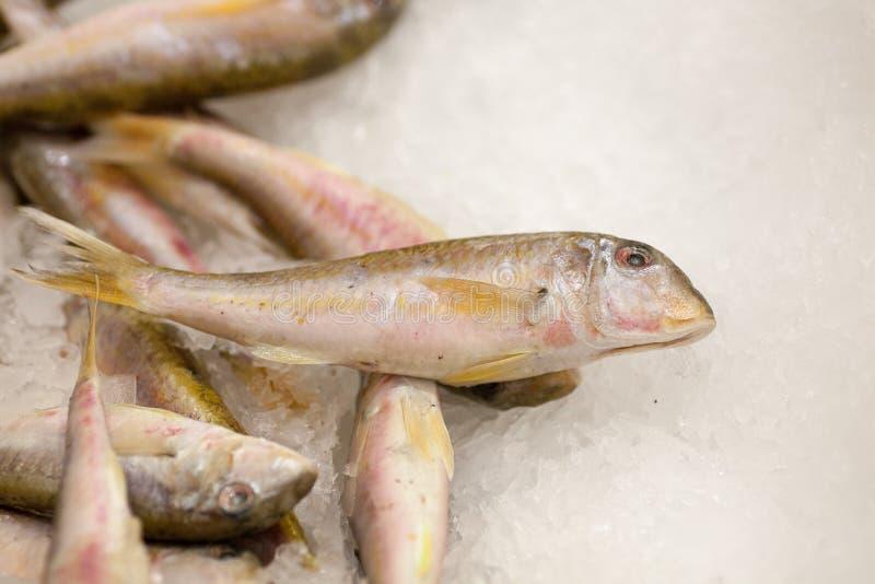 Frozen fish. Freshfish market. Gilt-head bream. Fish sale in market. Sea bream fish on ice. Fresh fish on ice for sale. Frozen ice-cold fish rams in the store royalty free stock photos