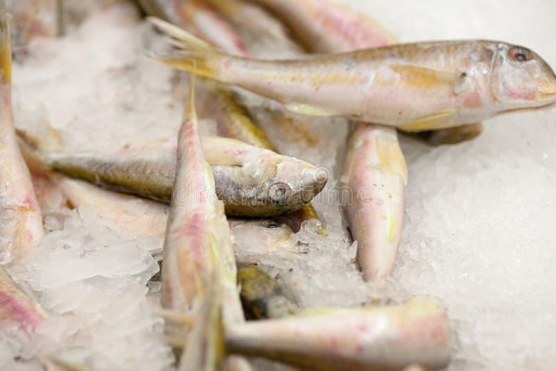 Frozen fish. Freshfish market. Gilt-head bream. Fish sale in market. Sea bream fish on ice. Fresh fish on ice for sale. Frozen ice-cold fish rams in the store stock images