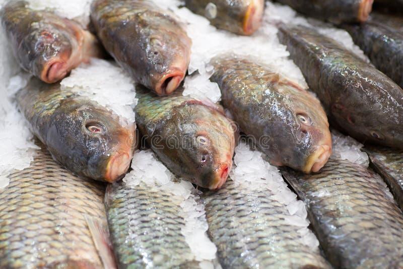 Frozen fish. Freshfish market. Gilt-head bream. Fish sale in market. Sea bream fish on ice. Fresh fish on ice for sale. Frozen ice-cold fish in the store Frozen stock image