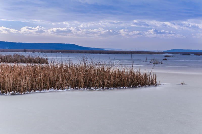Frozen lake. With reed in winter season stock images