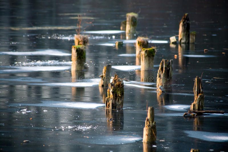 Frozen lake with stumps stock images