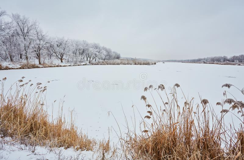 frozen lake on sunny winter& x27;s day with blue sky royalty free stock photos