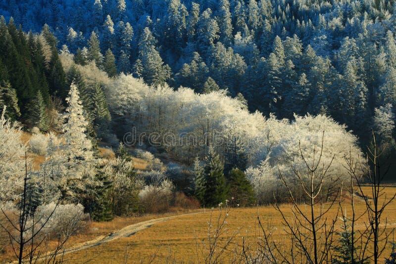 Frozen landscape royalty free stock photo