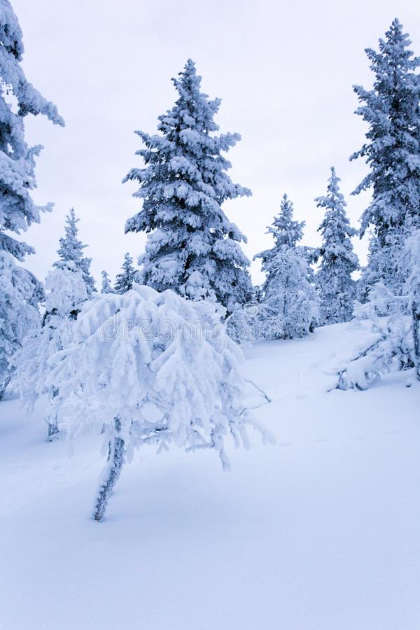 Frozen landscape during polar night. In Saariselka, Finland stock image