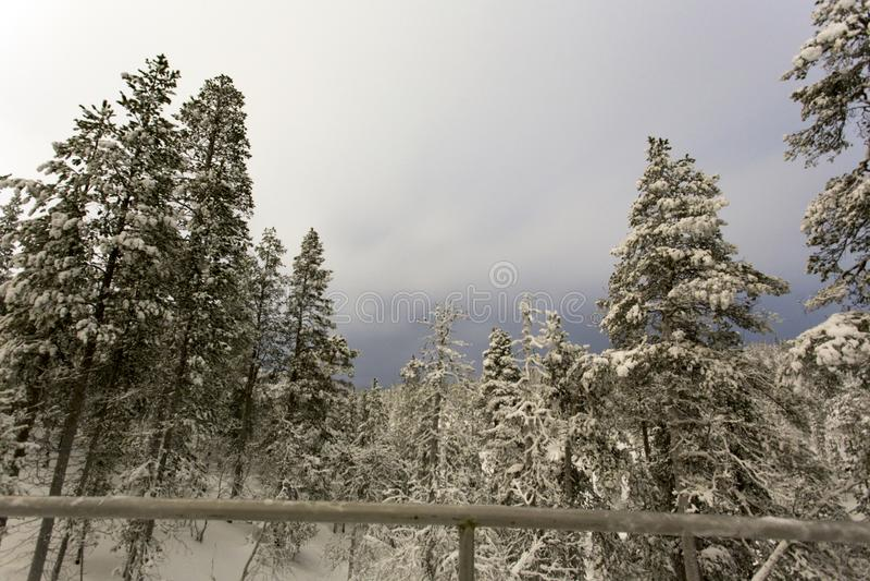 Frozen landscape during polar night. In Saariselka, Finland royalty free stock photo