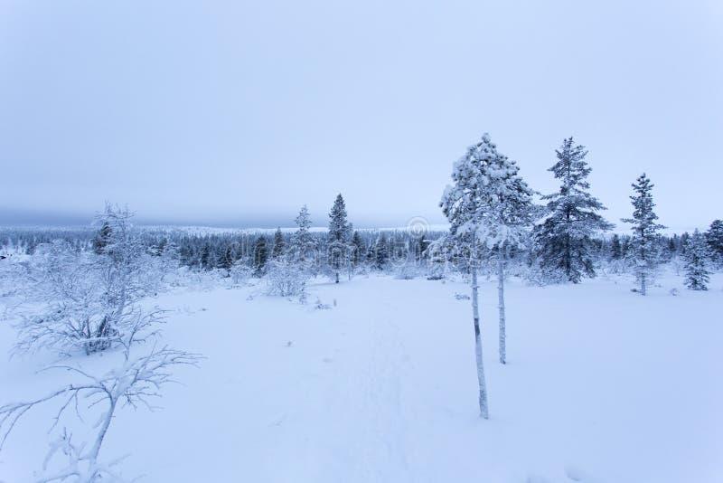 Frozen landscape during polar night in Saariselka. Finland royalty free stock photo