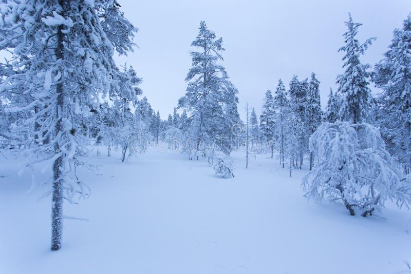Frozen landscape during polar night in Saariselka. Finland stock photos