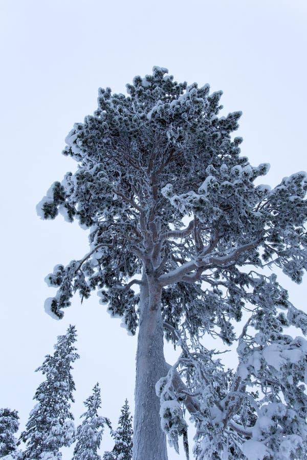 Frozen landscape during polar night in Saariselka. Finland royalty free stock photos