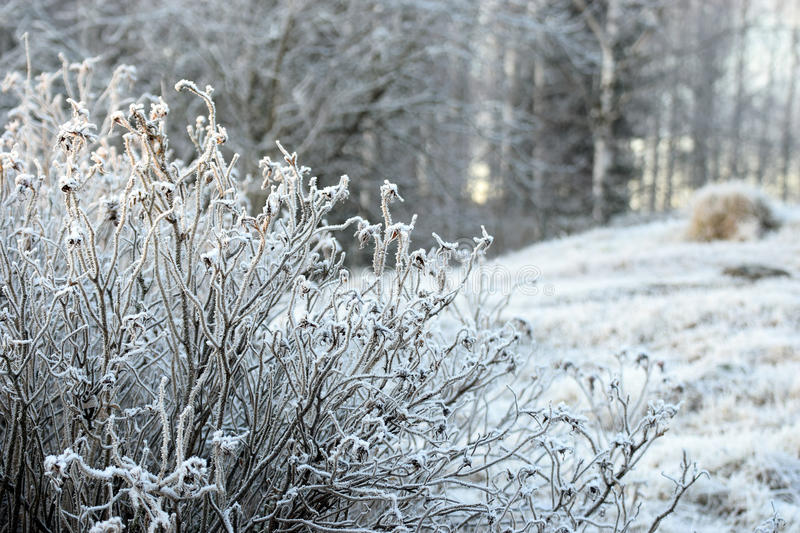 Frozen landscape. On winter. Hoarfrost on plants and field royalty free stock image