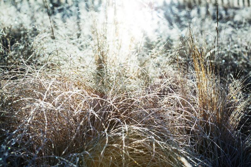 Frozen meadow. Frozen late autumn meadow close up. Winter background royalty free stock photo