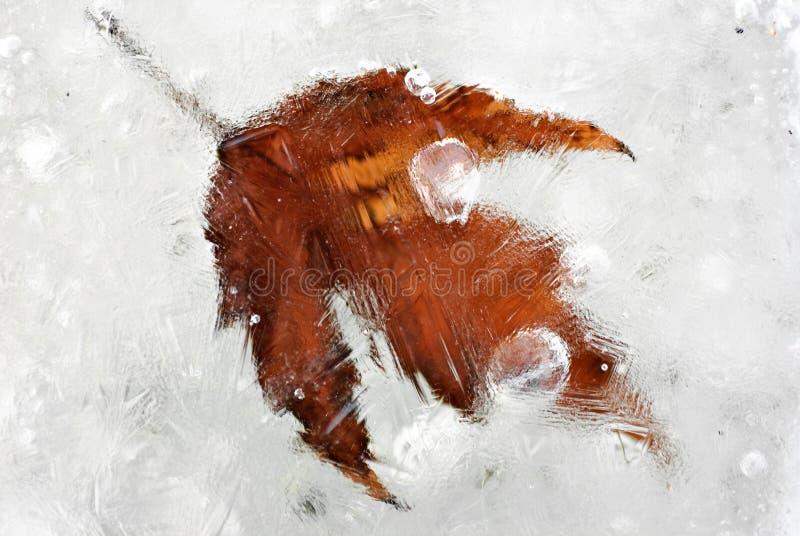 Frozen leaf stock photos