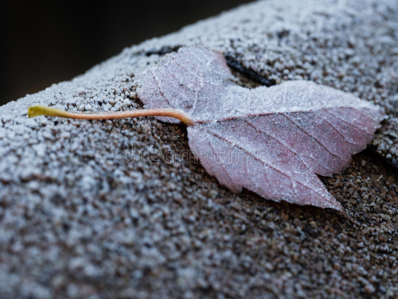 Frozen leaf. Frozen maple leaf on a frosty roof royalty free stock images