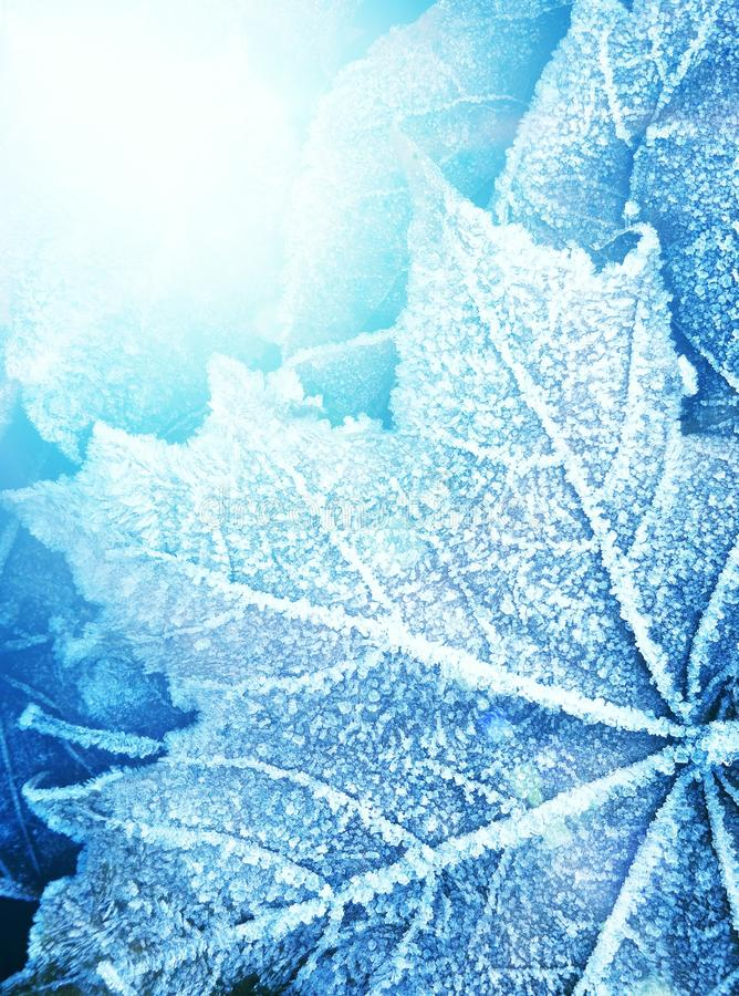 Free Frozen Leaf Texture Royalty Free Stock Photos - 18783558