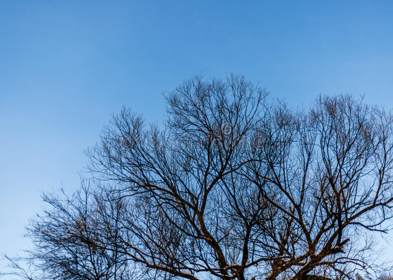 A frozen leafless tree in front of the deep blue winter sky on a cold clear day in winter stock images