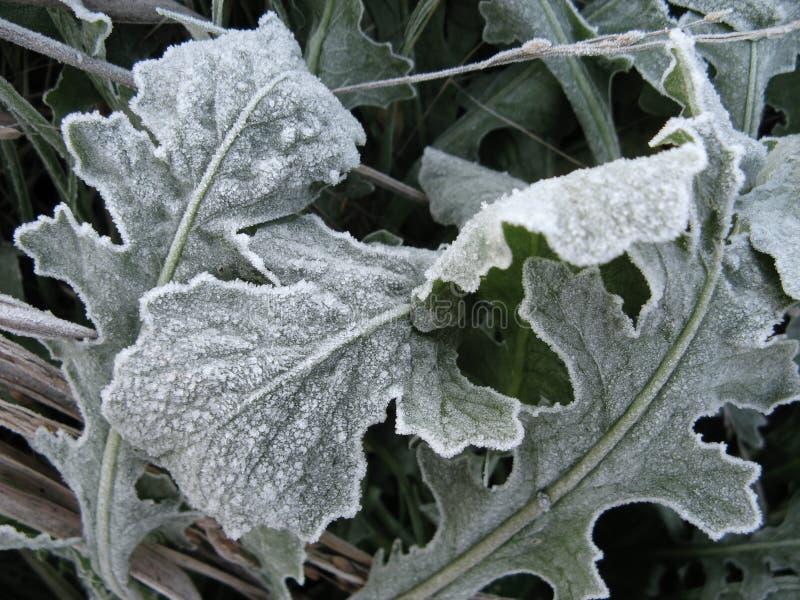 Download Frozen Leaves stock image. Image of macro, seasonal, green - 3883897