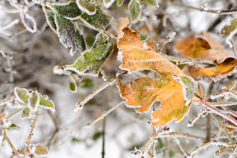 Frozen leaves background royalty free stock photos