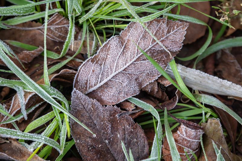Frozen Leaves. A full frame photograph of frozen leaves and grass royalty free stock image