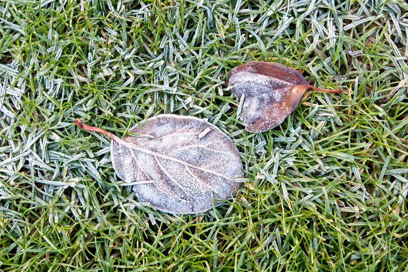 Frozen leaves on frozen grass. Frozen leaves and grass on a november winter morning stock images